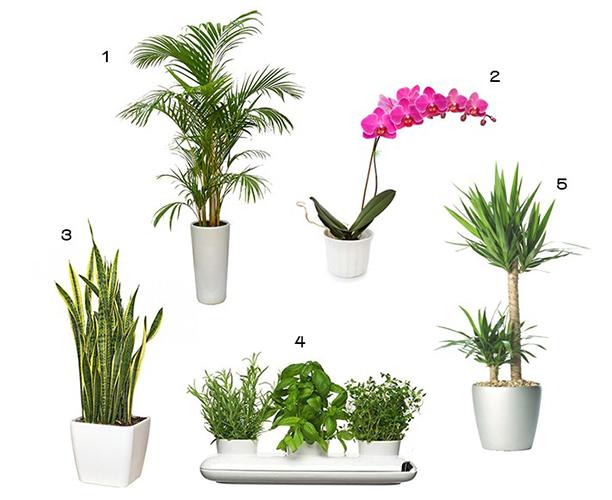 Chăm sóc cây kiểng trong nhà - top 7 lý do làm cây kiểng khô héo